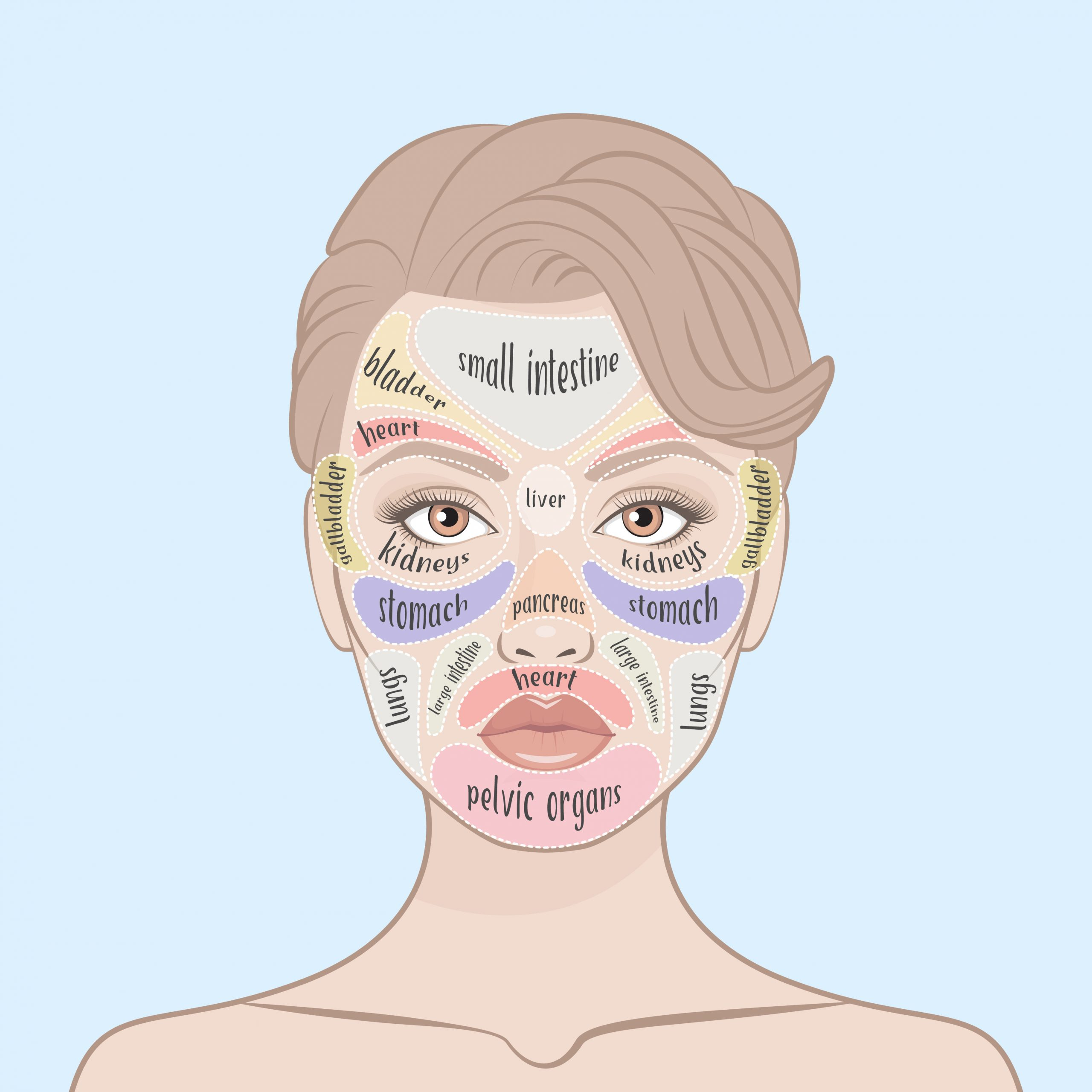 A graphic of a womans face that indicates the pattern of Chinese face mapping for great skin.